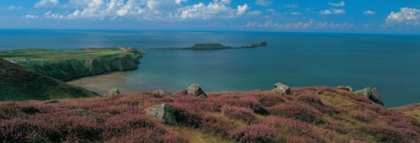 worms-head-gower 550